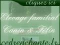Elevage familial du Cèdre Enchanté - Chiens, Chats